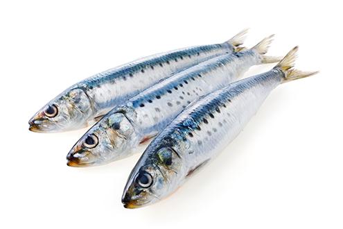 sardines pacific