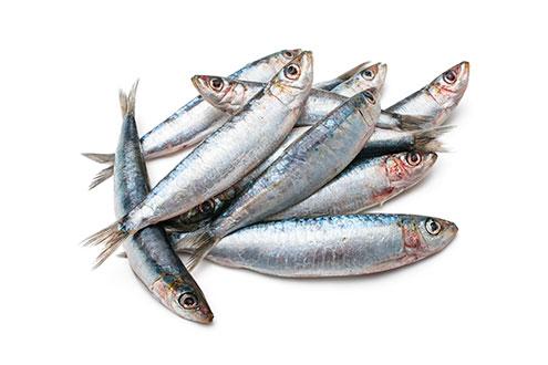 sardines atlantic